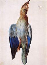 Ölü Mavi Kuzgun, 1512