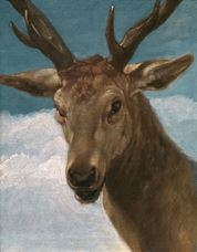 Show Head of a Deer, 1626-1636 details