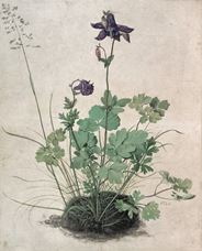 Hasekiküpesi, 1526
