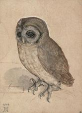Show The Little Owl, 1508 details