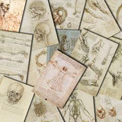 Anatomi - Leonardo da Vinci picture