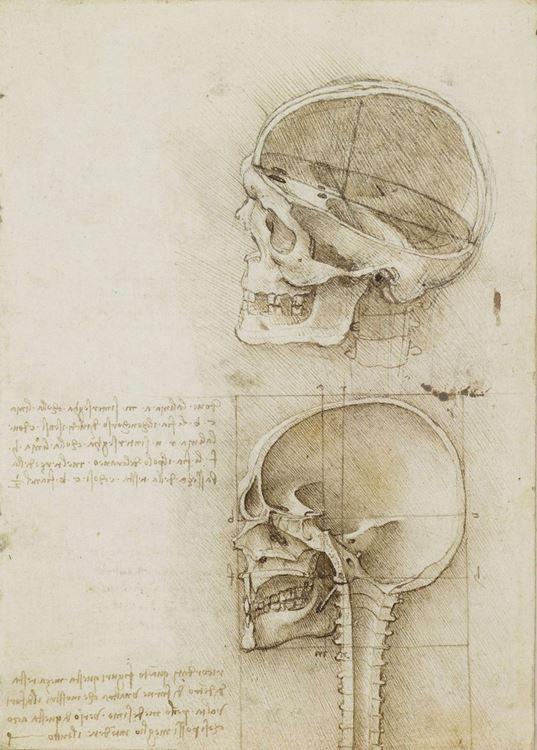 Kafatasının iki görünümü, 1489 picture