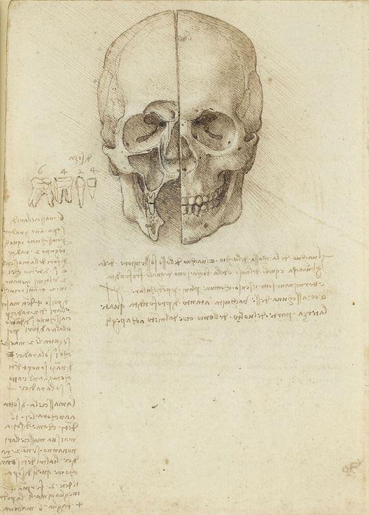 Kafatası çalışmaları, 1489 picture
