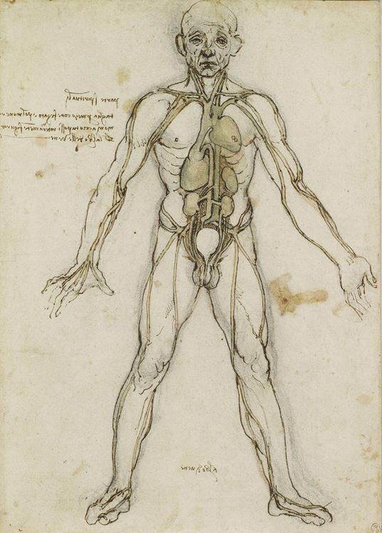 Kalp, akciğerler ve ana damarları gösteren anatomik figür, 1490-1500 picture