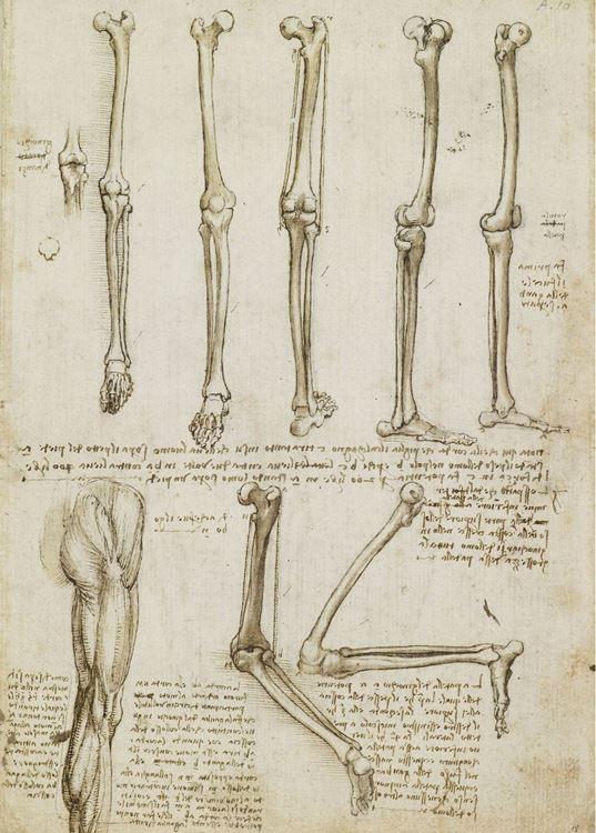 Bacak ve diz kemikleri, 1508-1510 dolayları picture