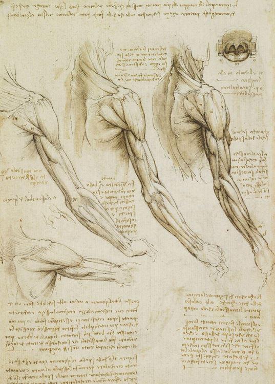 Hareket halindeki kol kasları; dil, boğaz ve küçük dil, 1508-1510 dolayları picture