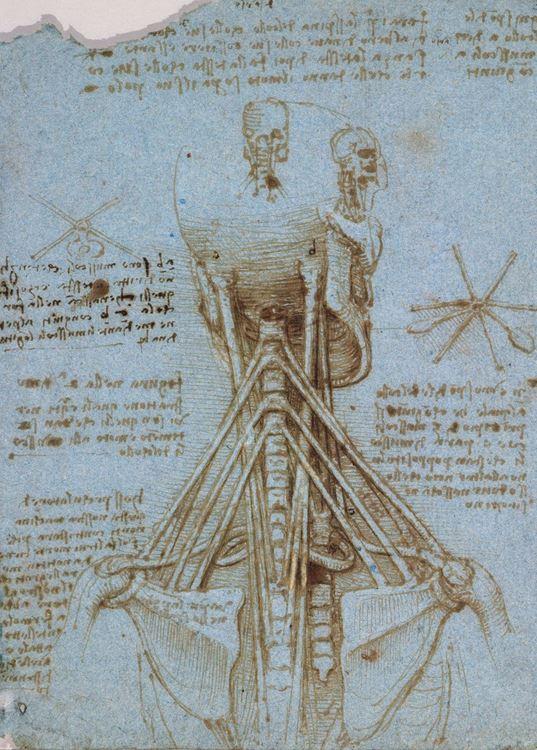 Boyun kasları, 1513 dolayları picture