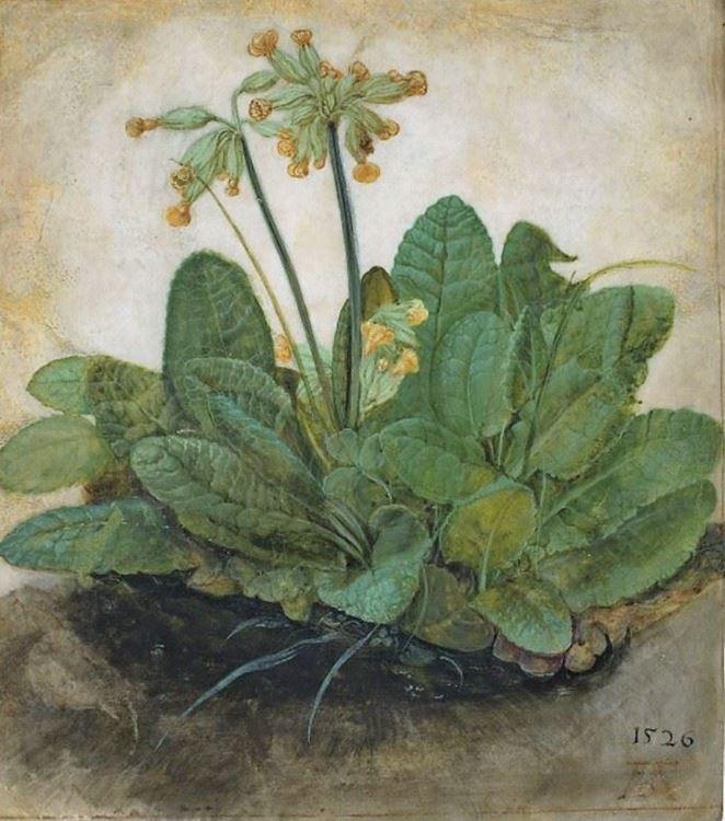 Çuha Çiçeği, 1526 picture