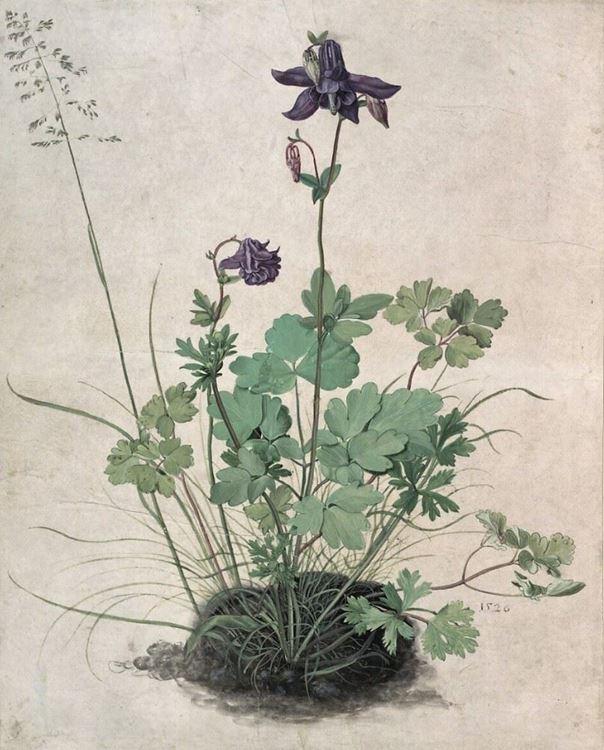 Hasekiküpesi, 1526 picture