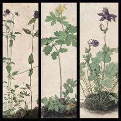 Bitki Resimleri - Albrecht Dürer picture