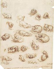 Kediler, Aslanlar ve Ejderha, 1513-1518 dolayları, Siyah tebeşir, kalem, mürekkep, 271 x 204 mm, Royal Collection, Windsor Castle, İngiltere.