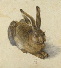 Tavşan, 1502