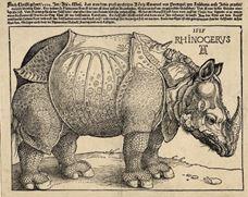 Gergedan, 1515