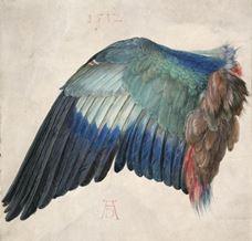 Mavi Kuzgun Kanadı, 1502 dolayları