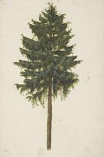 Ladin Ağacı, 1497 dolayları