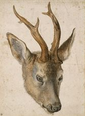 Show Head of a Stag, c. 1503 details