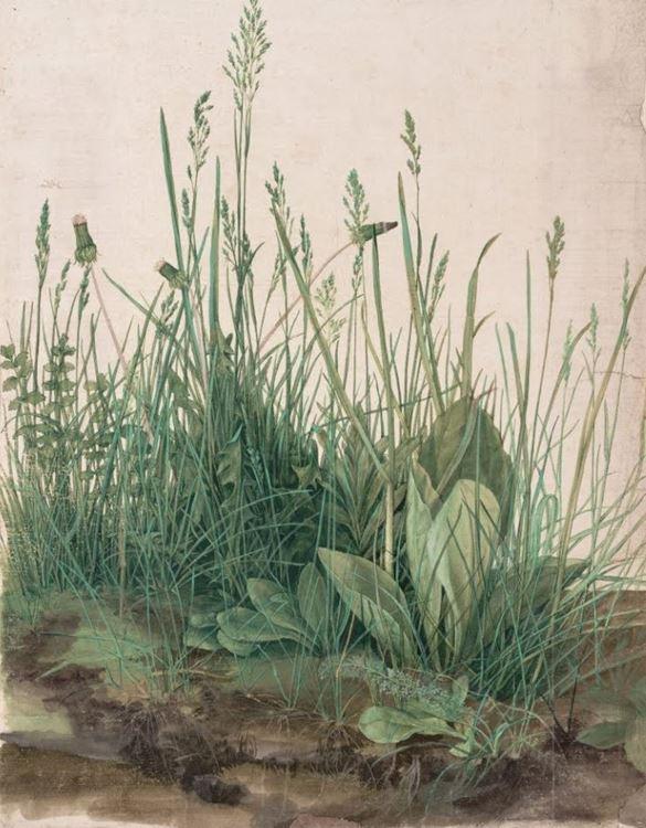 Büyük Çimen Öbeği, 1503 picture