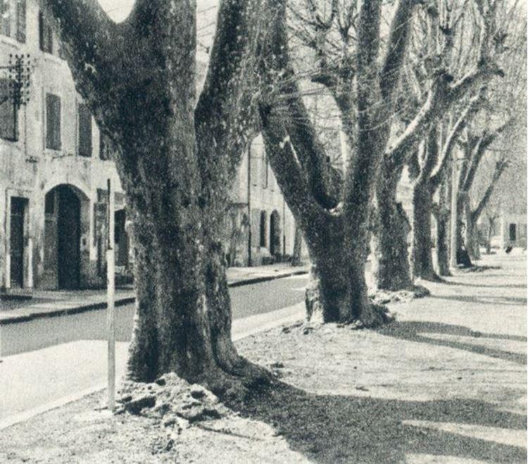 Büyük Çınar Ağaçları, 1889 picture