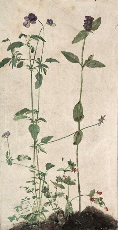 Üç Şifalı Bitki, 1526 picture