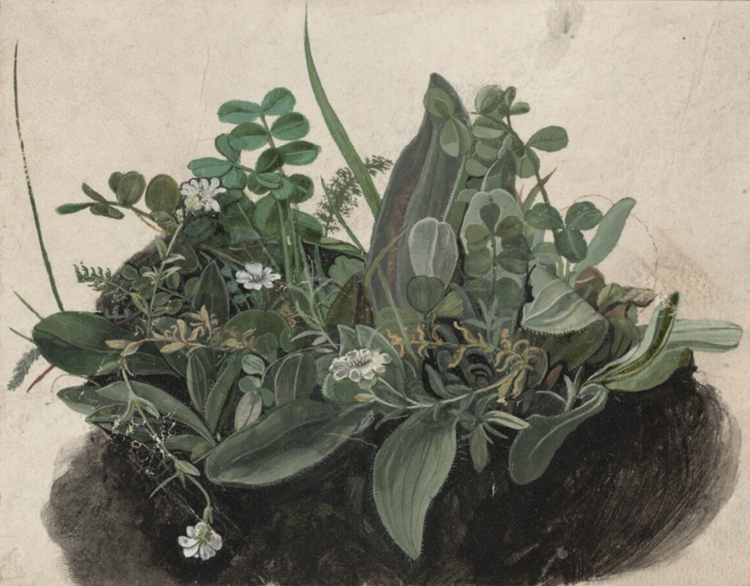Küçük Çimen Öbeği, 1502-1503 picture