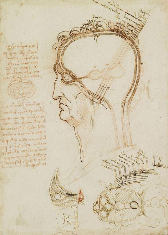 Yarılmış bir insan kafatası, 1493-1494 dolayları picture