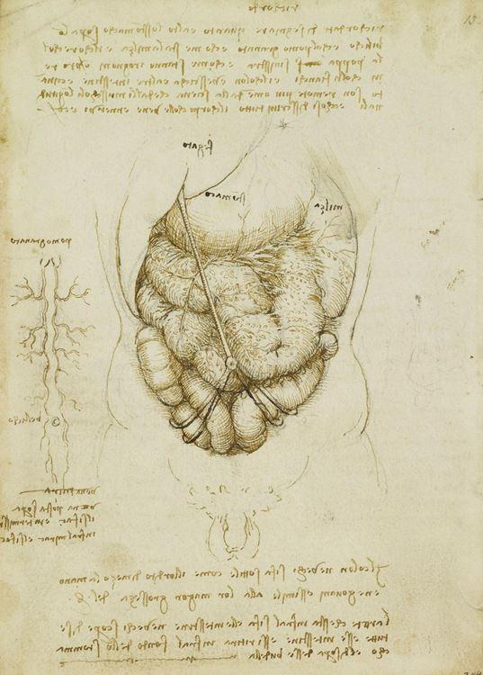 Bağırsaklar, 1506-1508 picture