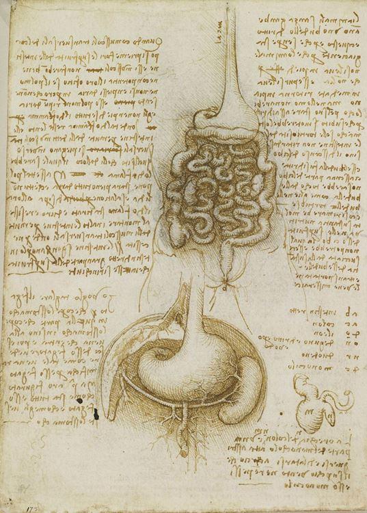 Mide ve bağırsaklar, 1506-1508 picture