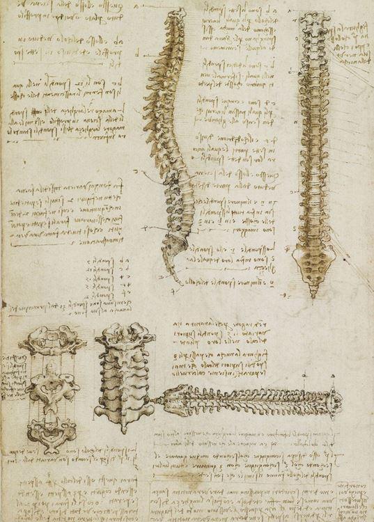 Omurga, 1508-1509 picture