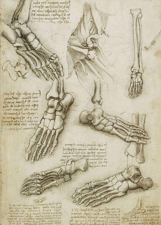 Ayak ve omuz kemikleri, 1508-1510 picture