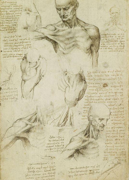 Erkek boynu ve omzu, 1509-1510 dolayları picture