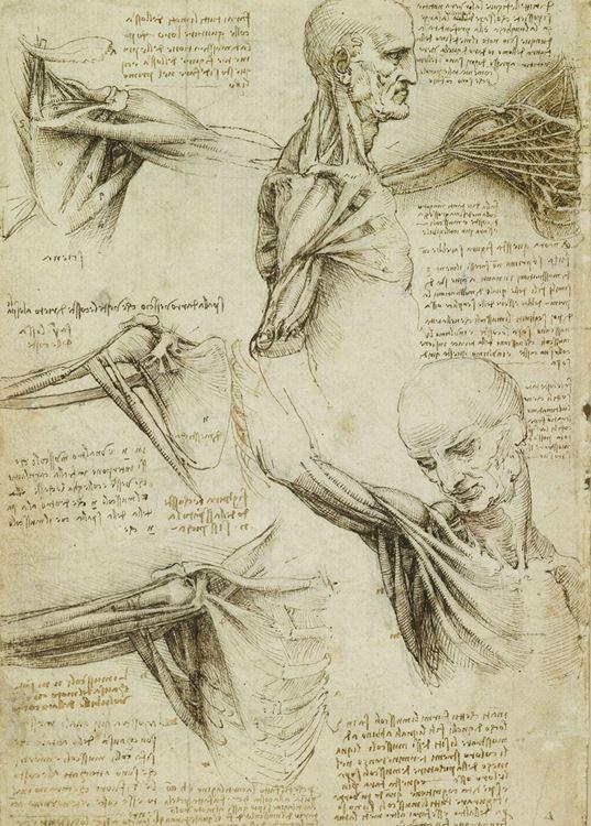 Omuz kasları, 1509-1510 picture