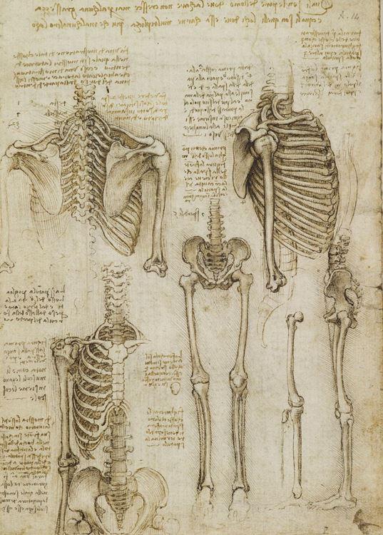 Üst gövde ve bacak iskeleti, 1509-1510 picture