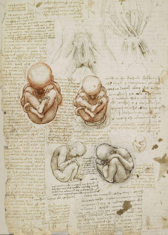 Kadın cinsel organı ve fetüs, 1510-1512 picture