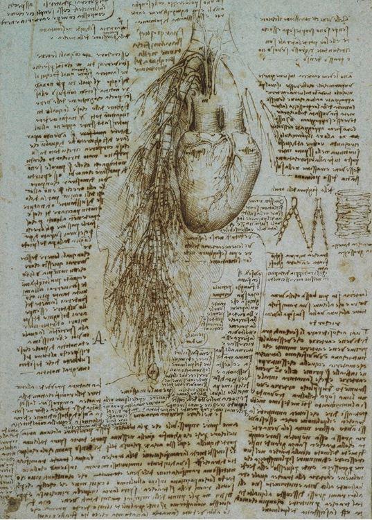 Kalp ve akciğer, 1513 dolayları picture