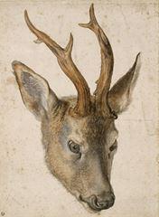 Show Geyik Başı, 1503 dolayları, Suluboya, 22.7 x 16 cm, Musée Bonnat-Helleu, Bayonne, Fransa. details